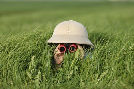 Searching through high grass